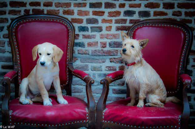 Inside Le Waf, the French café where dogs and humans get to hang out