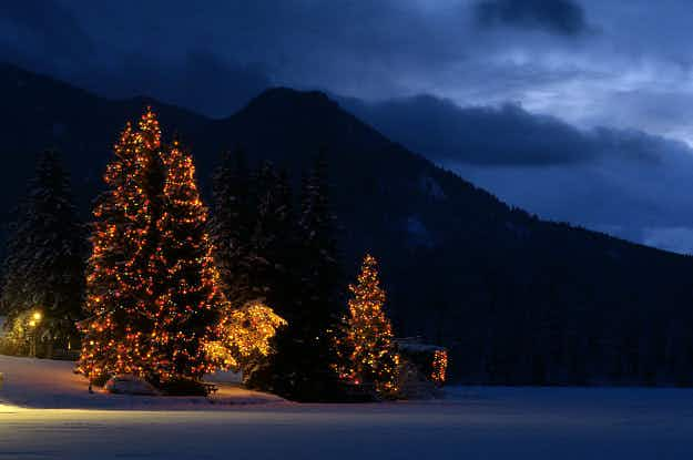Want to fly with your Christmas tree this year? With this Austrian airline you can