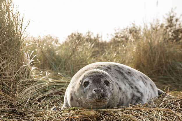 See the adorable seal pups drawing travellers to the Lincolnshire coast