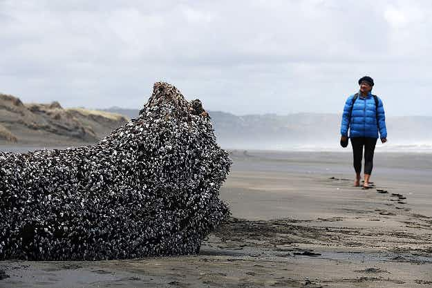 A bizarre-looking object that washed up on a New Zealand beach has people stopping for a look