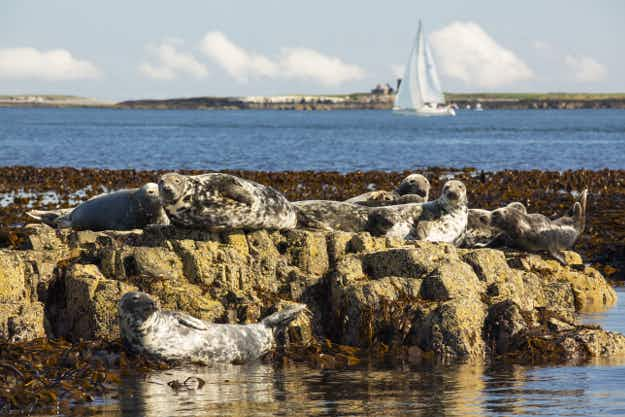 Want to live among seals and puffins? There's a job opening on the UK's Farne Islands