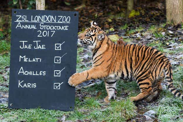 In Pictures: London Zoo counts the animals one by one for its annual census