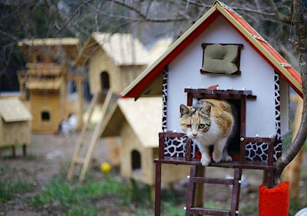 Remarkable Inside Turkeys Cat Village With Kitty Playgrounds Villas Home Interior And Landscaping Synyenasavecom