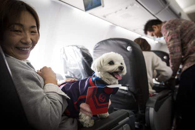 What a ruff flight! An airline is allowing passengers to fly with their dogs in the main cabin