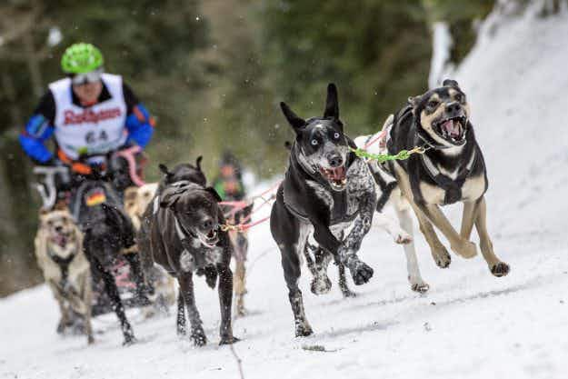 In Pictures: the International Dog Sled Race in Todtmoos, Germany