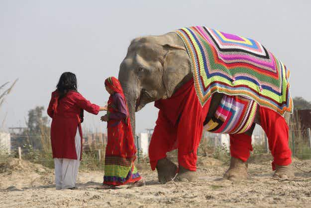 Rescue elephants in India get special sweaters to keep them warm for winter