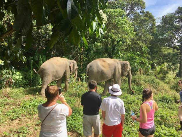 Phuket's new elephant sanctuary wants to educate travellers about harm caused by elephant-riding