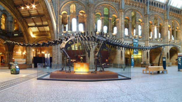 Iconic museum dinosaur Dippy is set to embark on a two-year tour of Britain and Northern Ireland