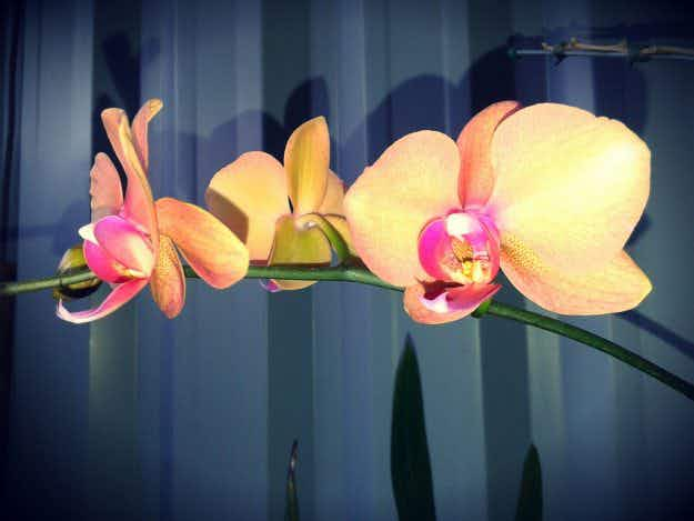 Orchids get the modern art treatment at Washington DC's Hirshhorn Museum