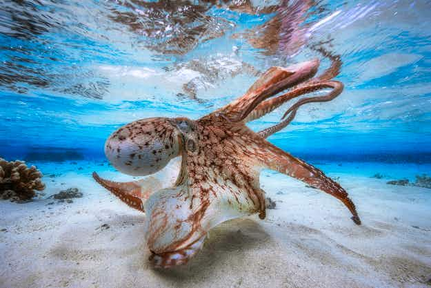 See the incredible winning images of the Underwater Photographer of the Year contest