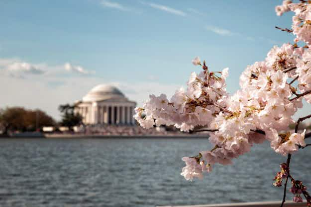Discover where and when you can see spring blossoms around the world