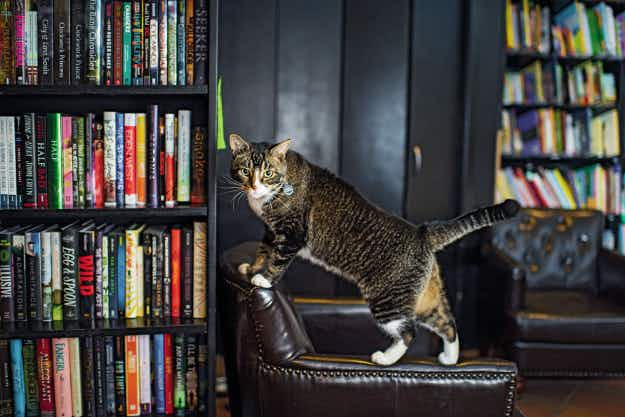 Discover where to find adorable cats that are permanent fixtures in the eclectic shops of New York
