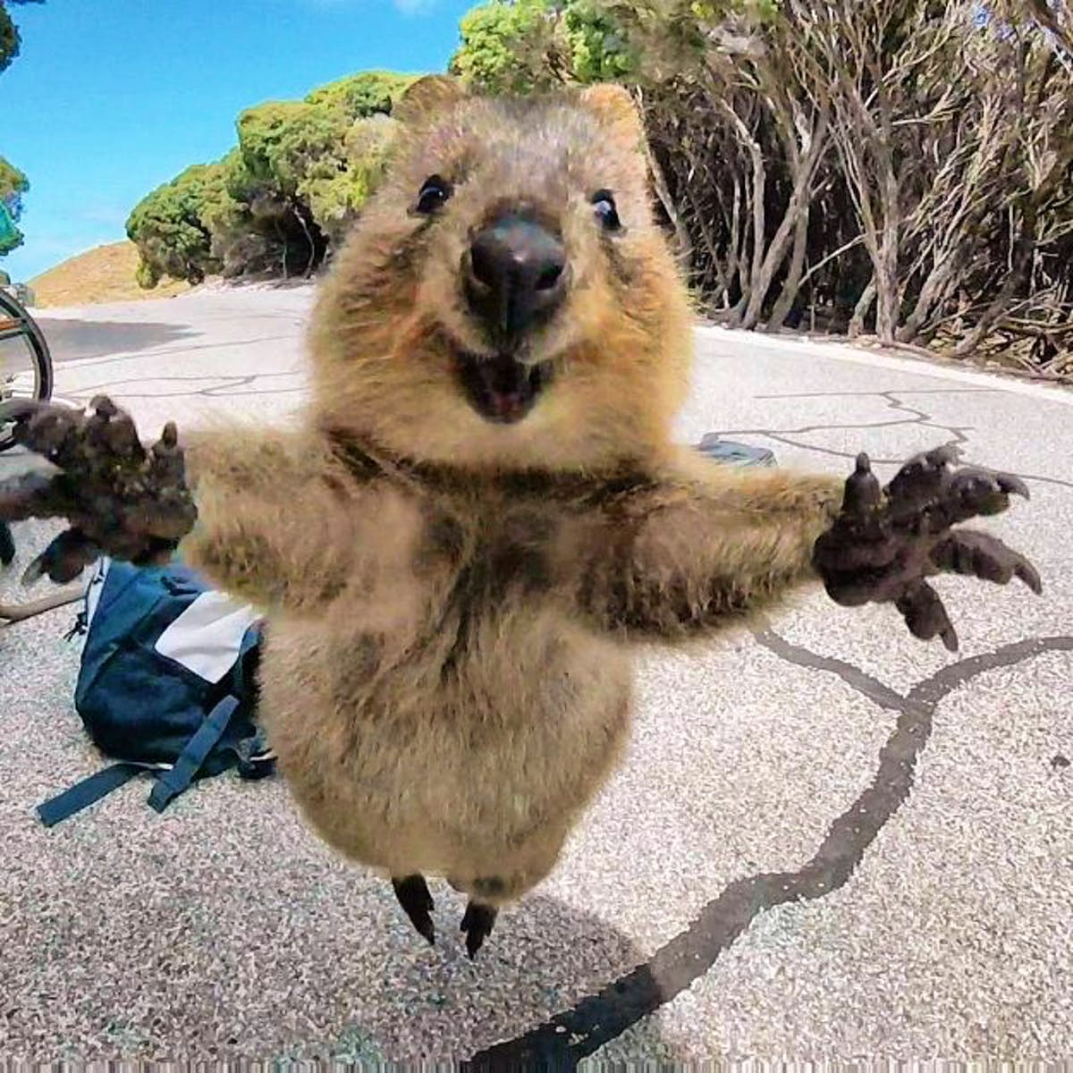 Why the quokka is still the main attraction on Australia's Rottnest Island  - Lonely Planet