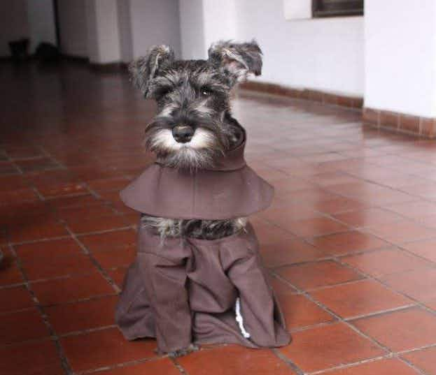 This adorable dog has joined a monastery in Bolivia and is now known as Friar Moustache