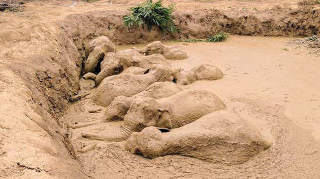 Watch adorable elephants helping each other out of a crater after getting stuck in the mud