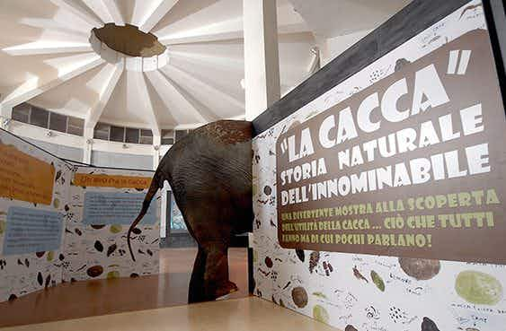 """Poo is life"": Rome's Bioparco zoo opens a poo-themed exhibition"