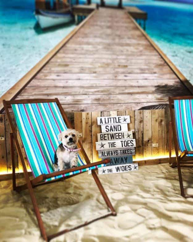 A beach-themed dog café has opened in Manchester, and it's sure to be a howling success