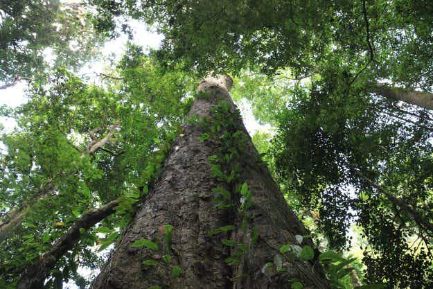 The discovery of Africa's tallest tree may bring increased tourism to Mount Kilimanjaro