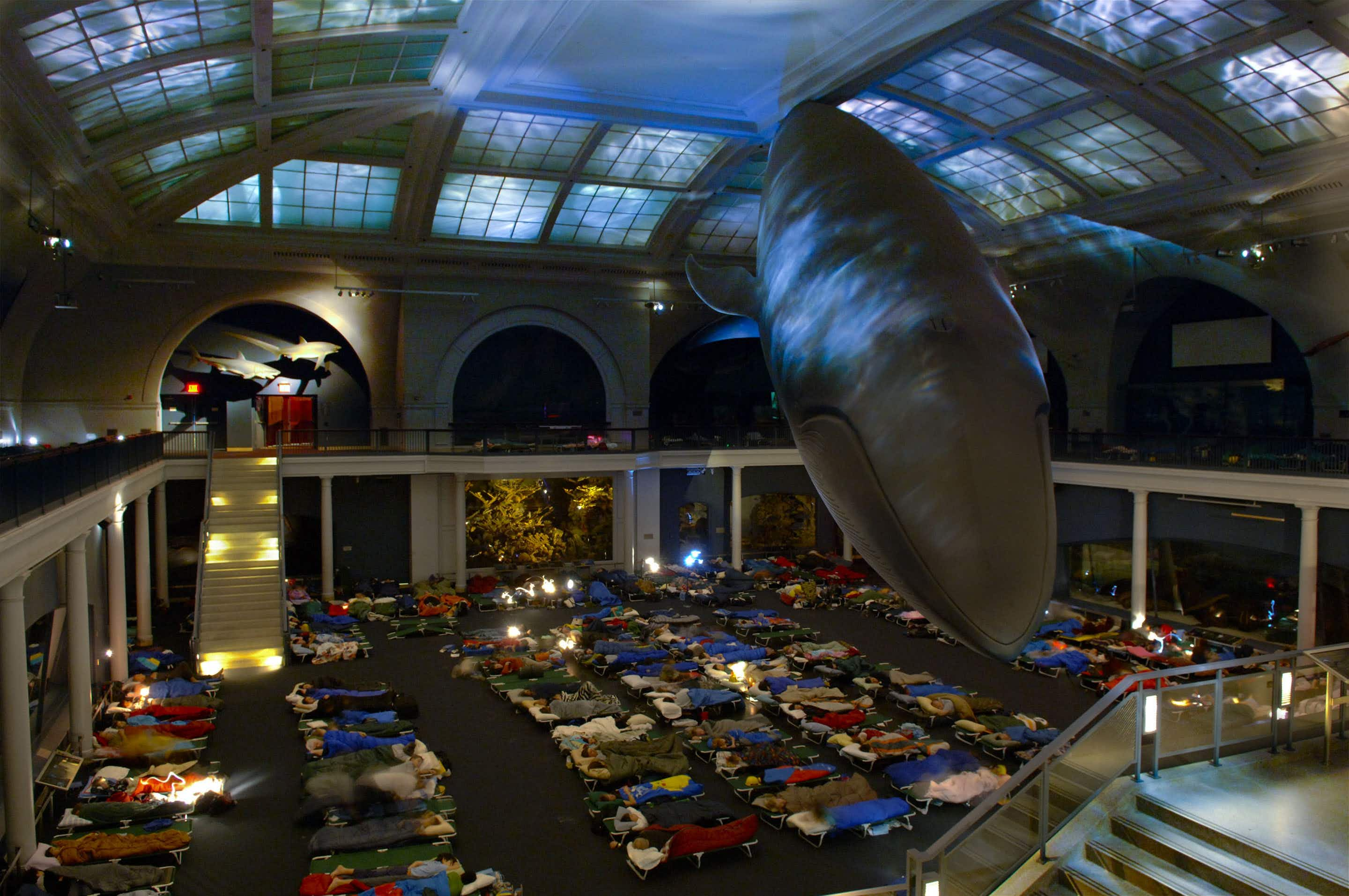 Spend a night at the American Museum of Natural History in New York
