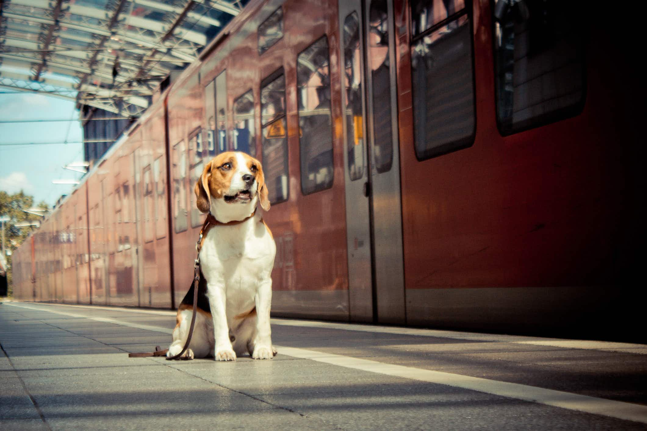 Paris has gone to the dogs as large pooches can now travel on trains (once they have their own ticket)