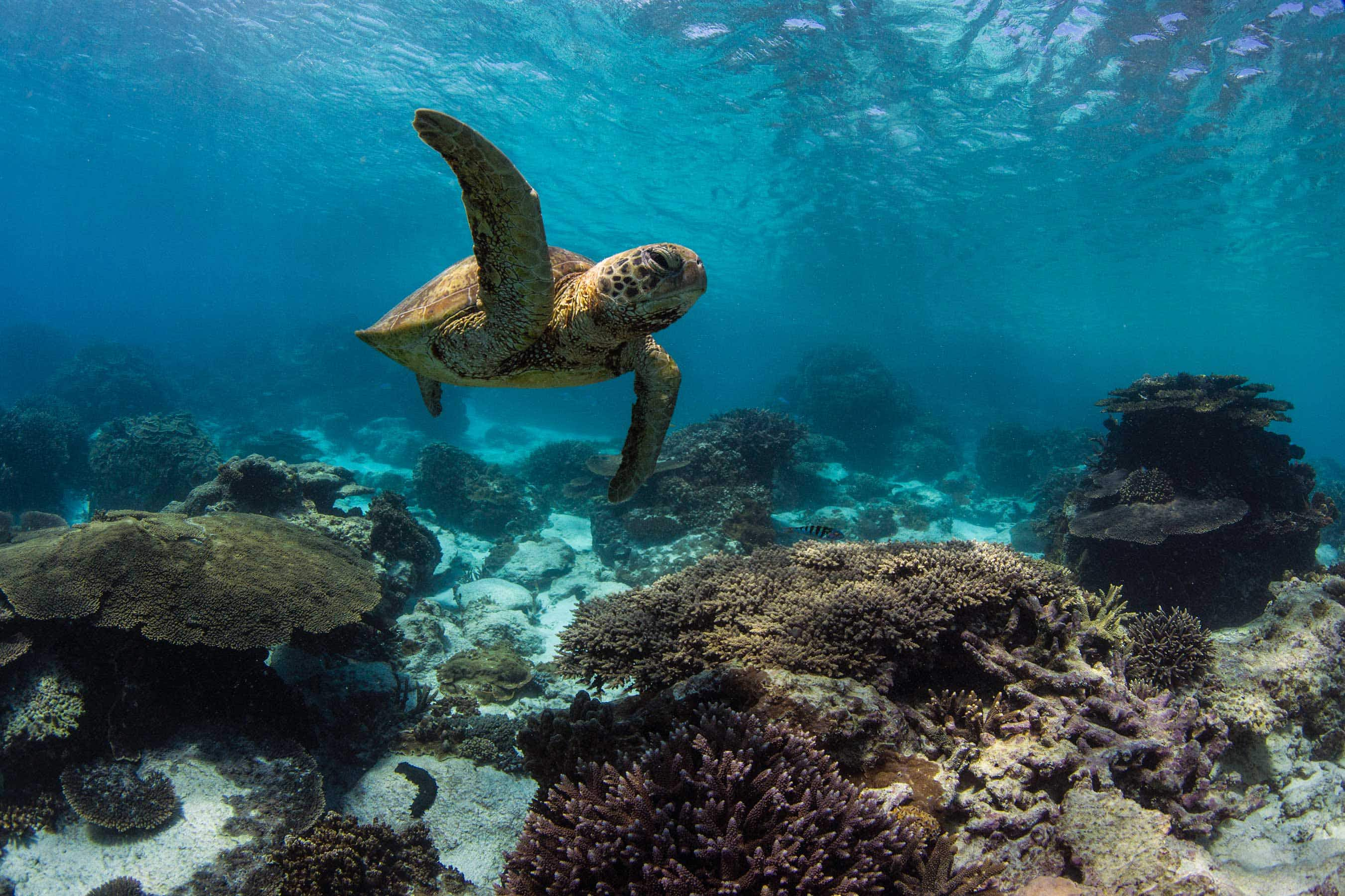 Earth Day: how travellers can help protect the world's fragile coral reefs