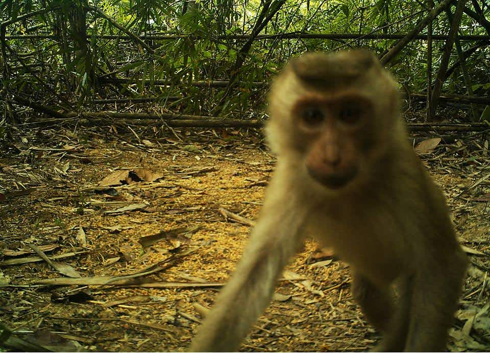 Rare wildlife images captured on hidden cameras in Cambodia