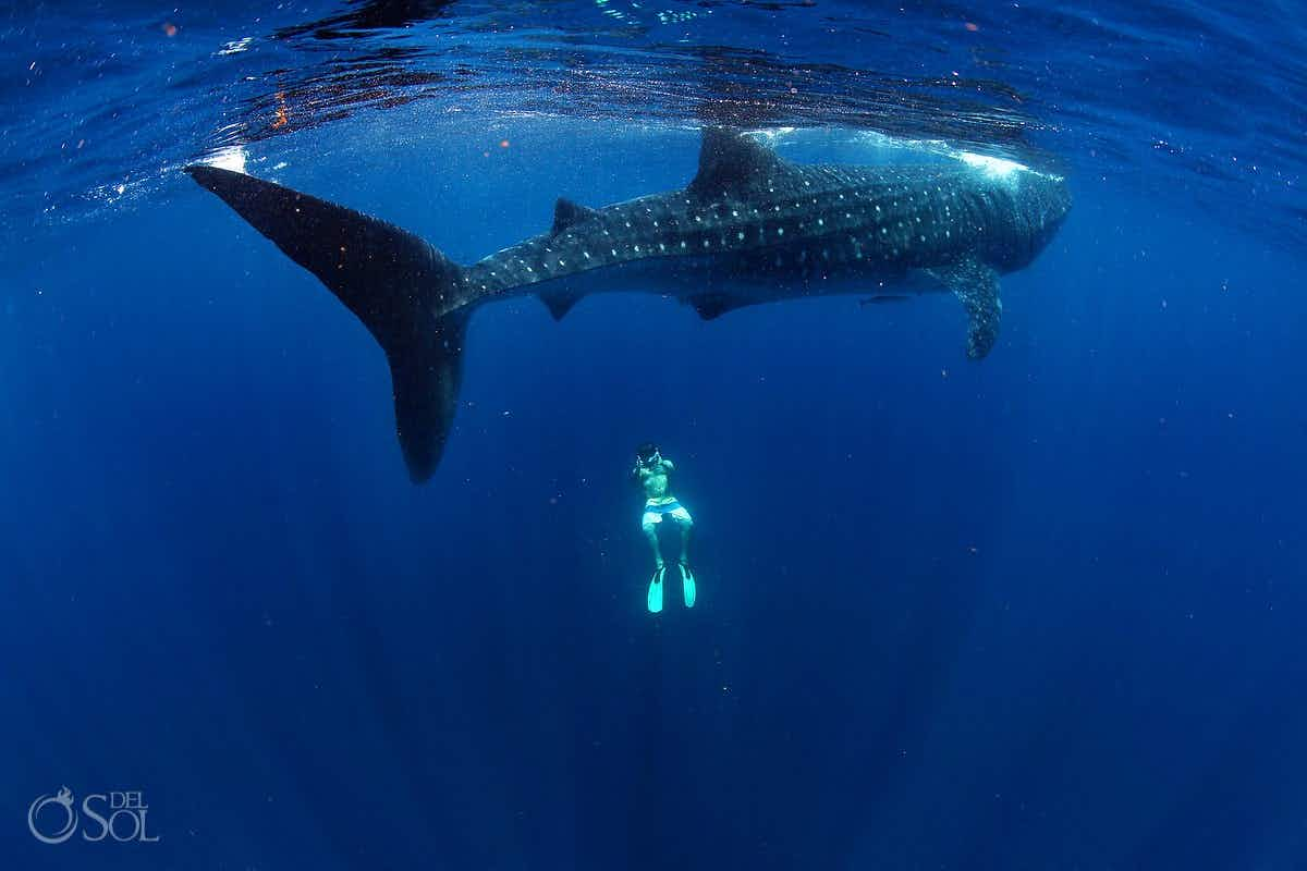 """Be patient with the circling whale sharks"", freediving photographer on how he got these amazing images"