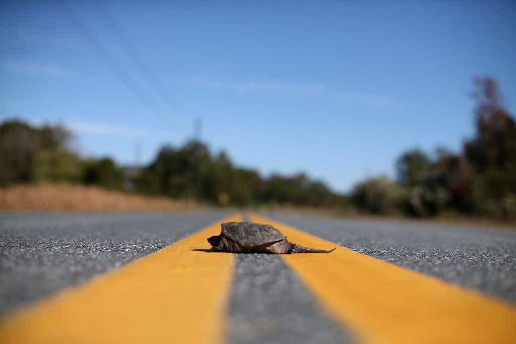 This town in Ontario is saving the lives of tens of thousands of turtles