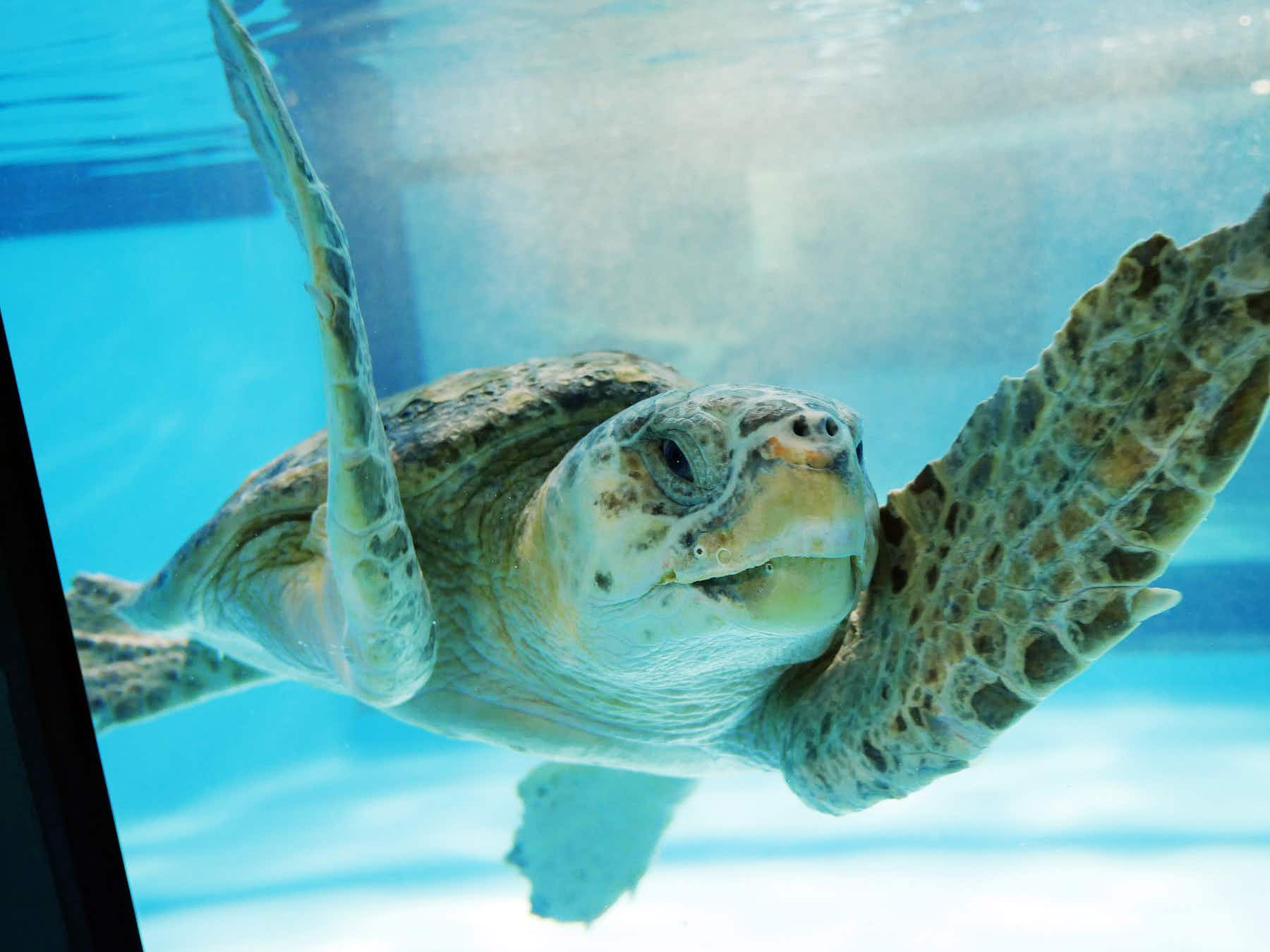 Get up close and personal with endangered sea turtles at this South Carolina rescue centre