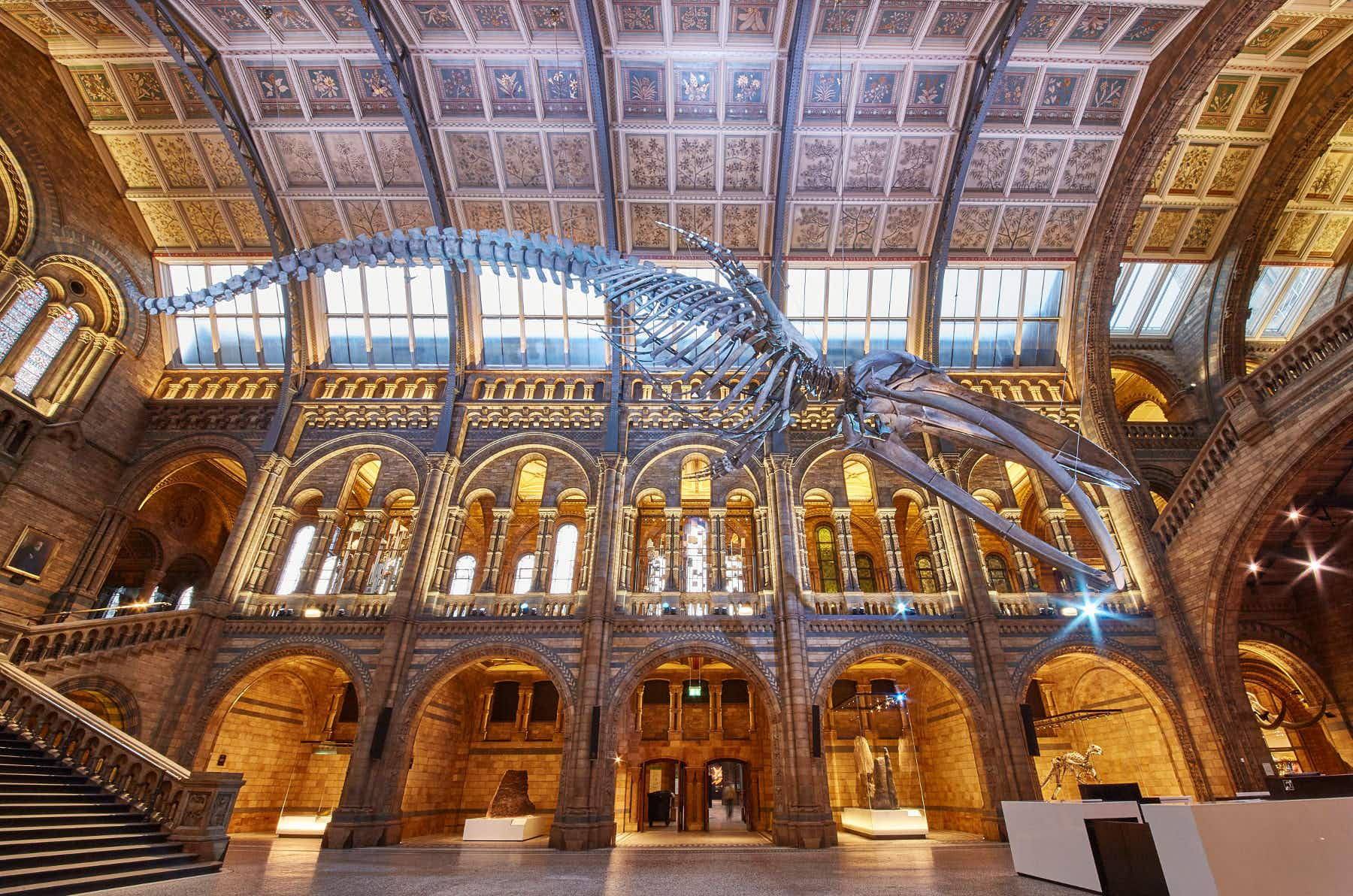 London's Natural History Museum's spectacular transformation has a message of hope