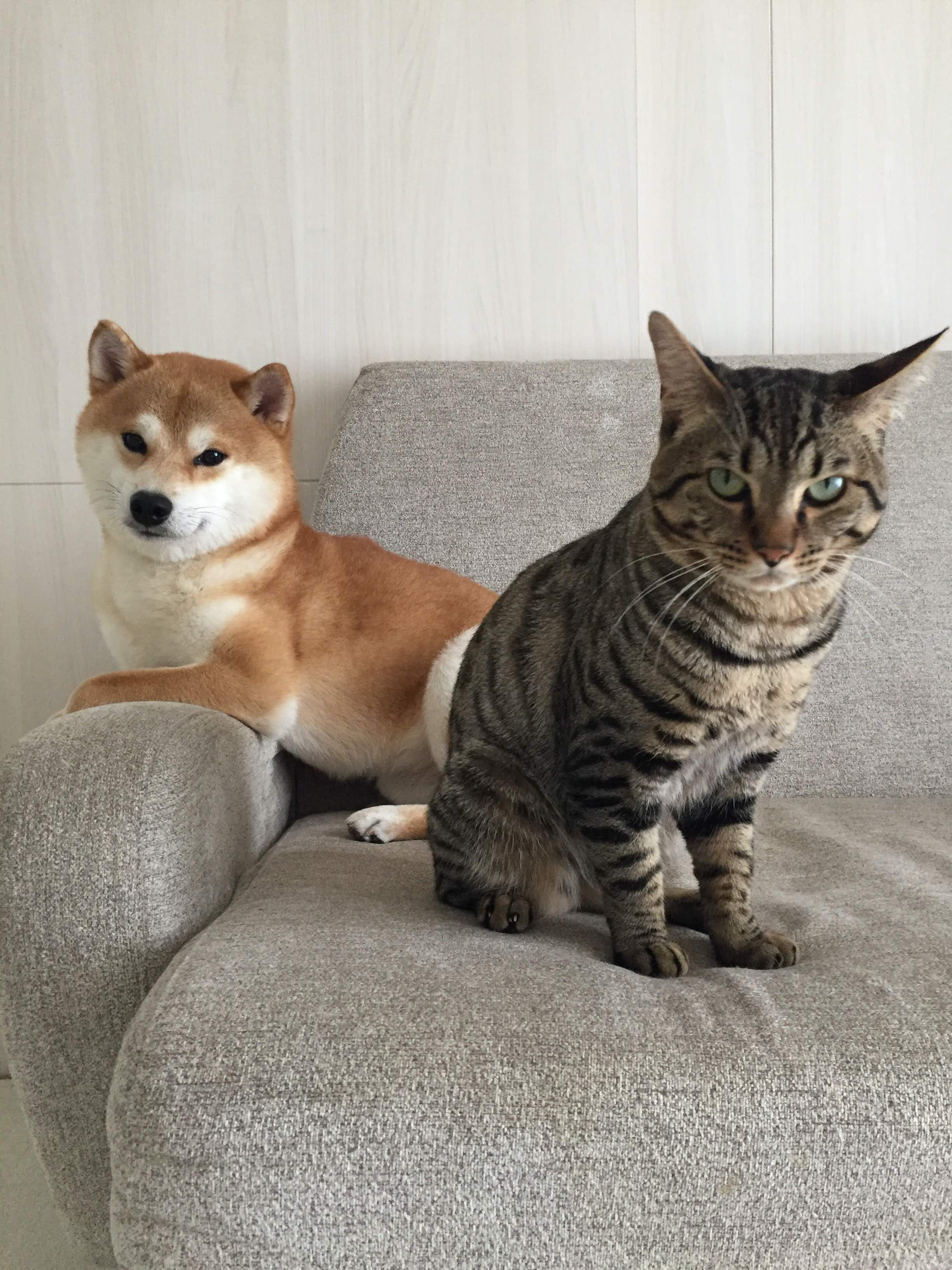 This unlikely friendship between a cat and dog in Tokyo has gone viral with thousands of Instagram followers