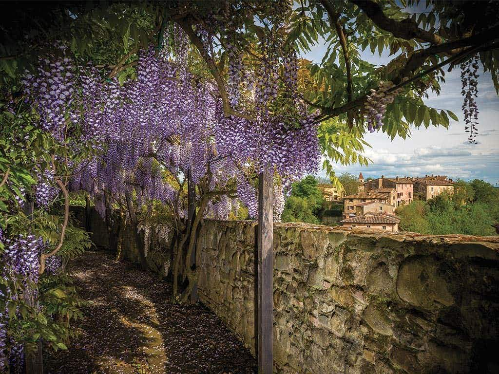 You can take part in traditional harvesting at an old Tuscan olive grove