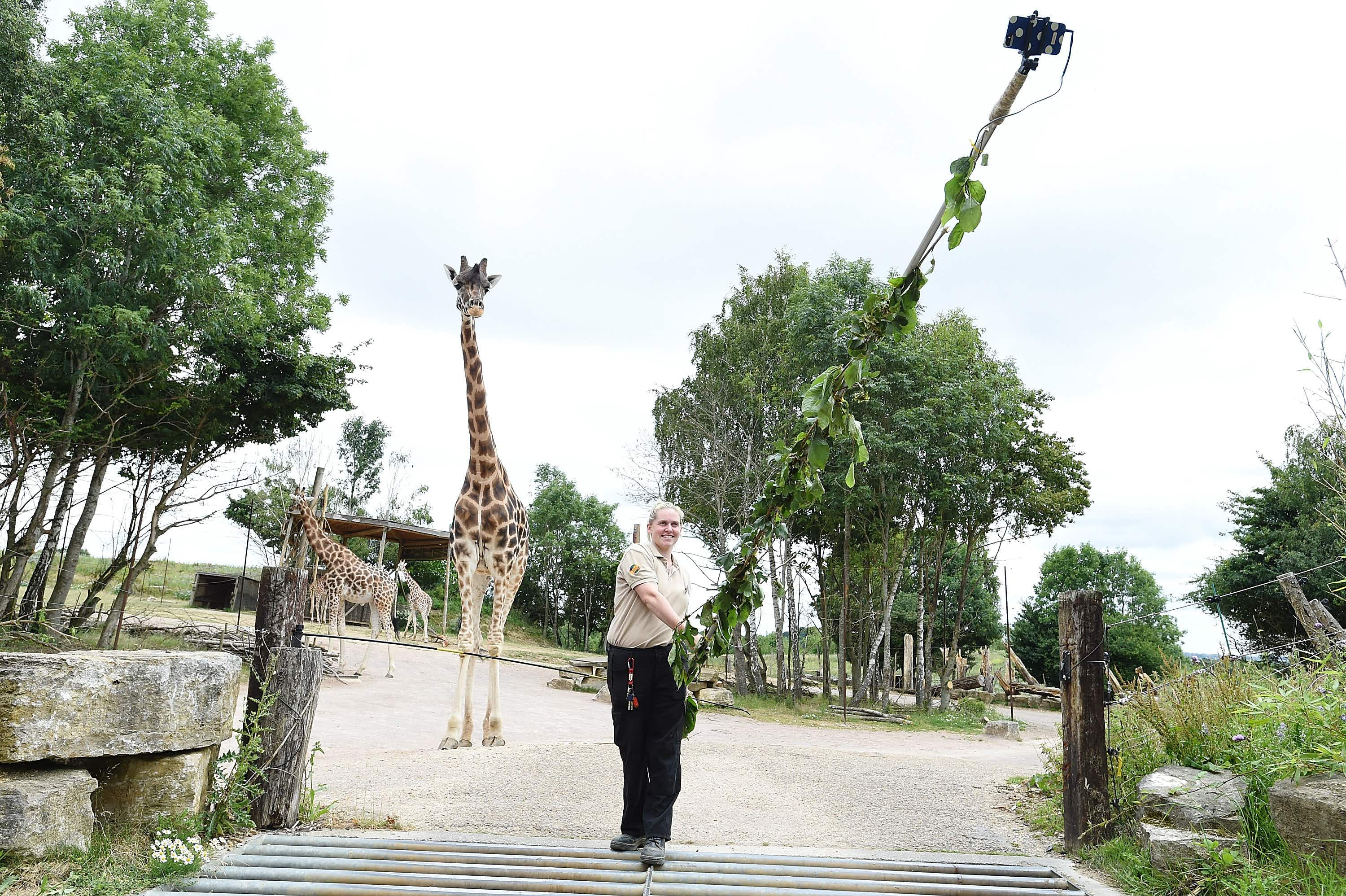 Zookeeper makes a 20ft selfie stick to let visitors snap themselves with giraffes