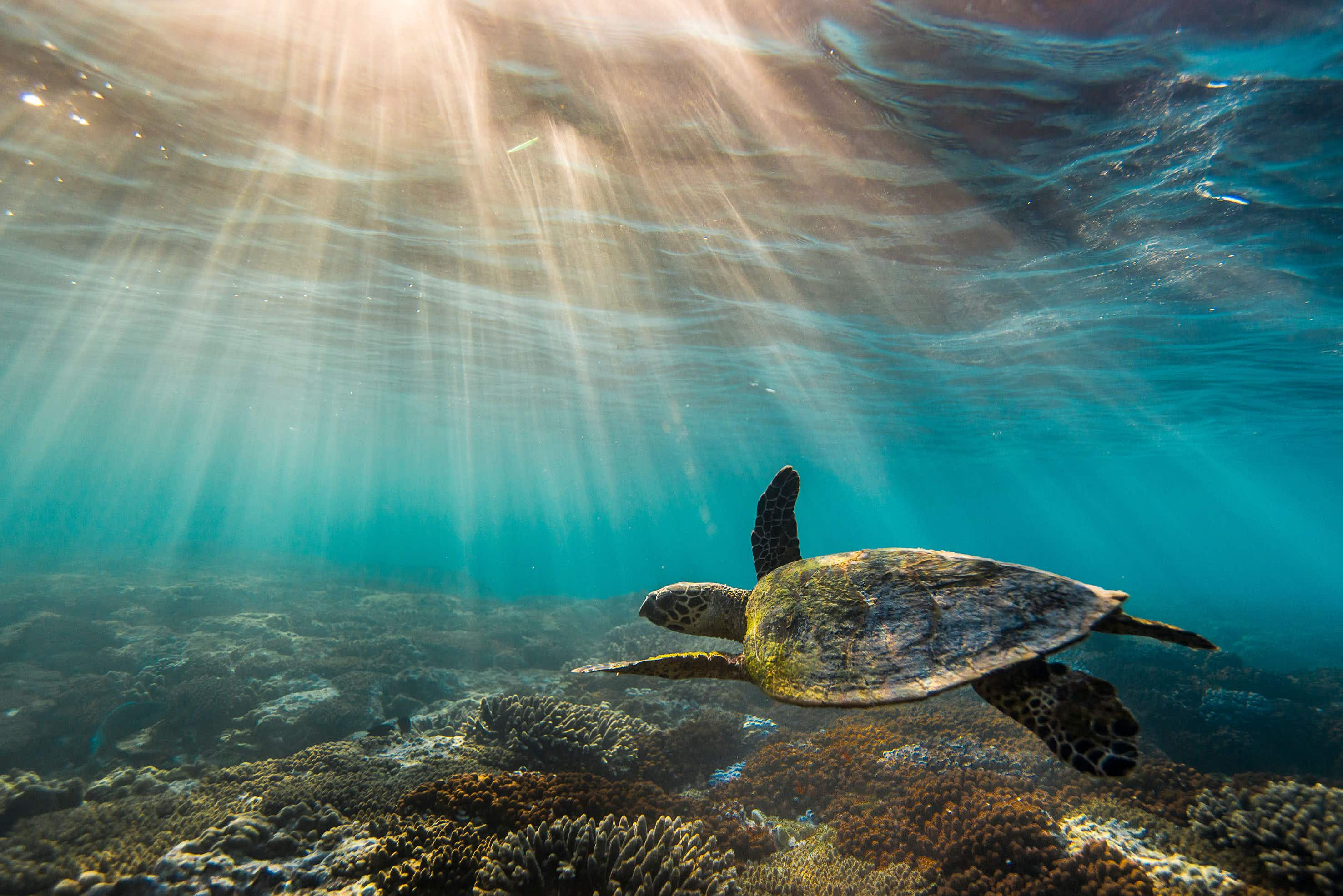 Australian accountants give the Great Barrier Reef an AU$56 billion price tag