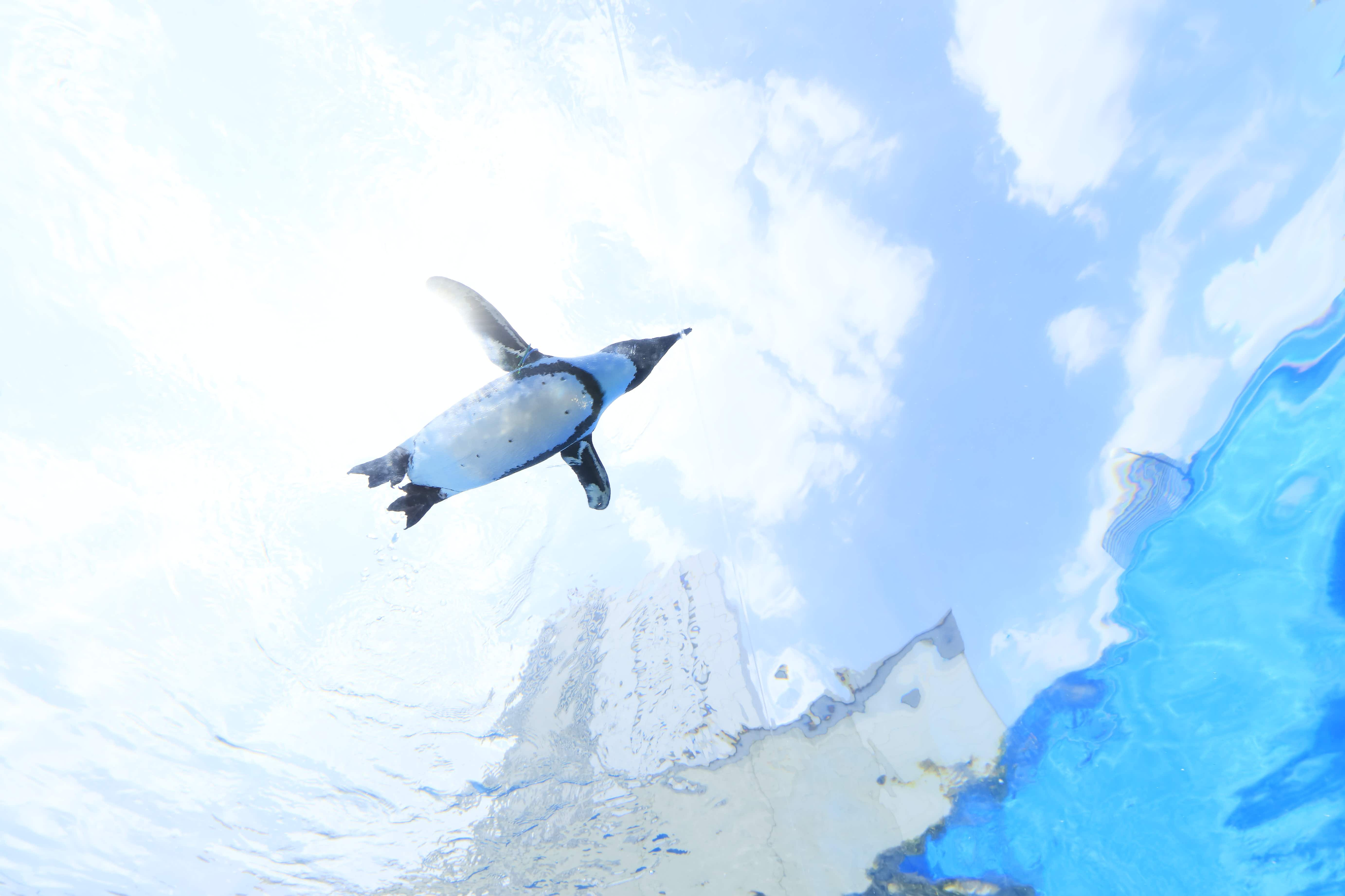 Watch as penguins fly over Tokyo city at this incredible aquarium experience