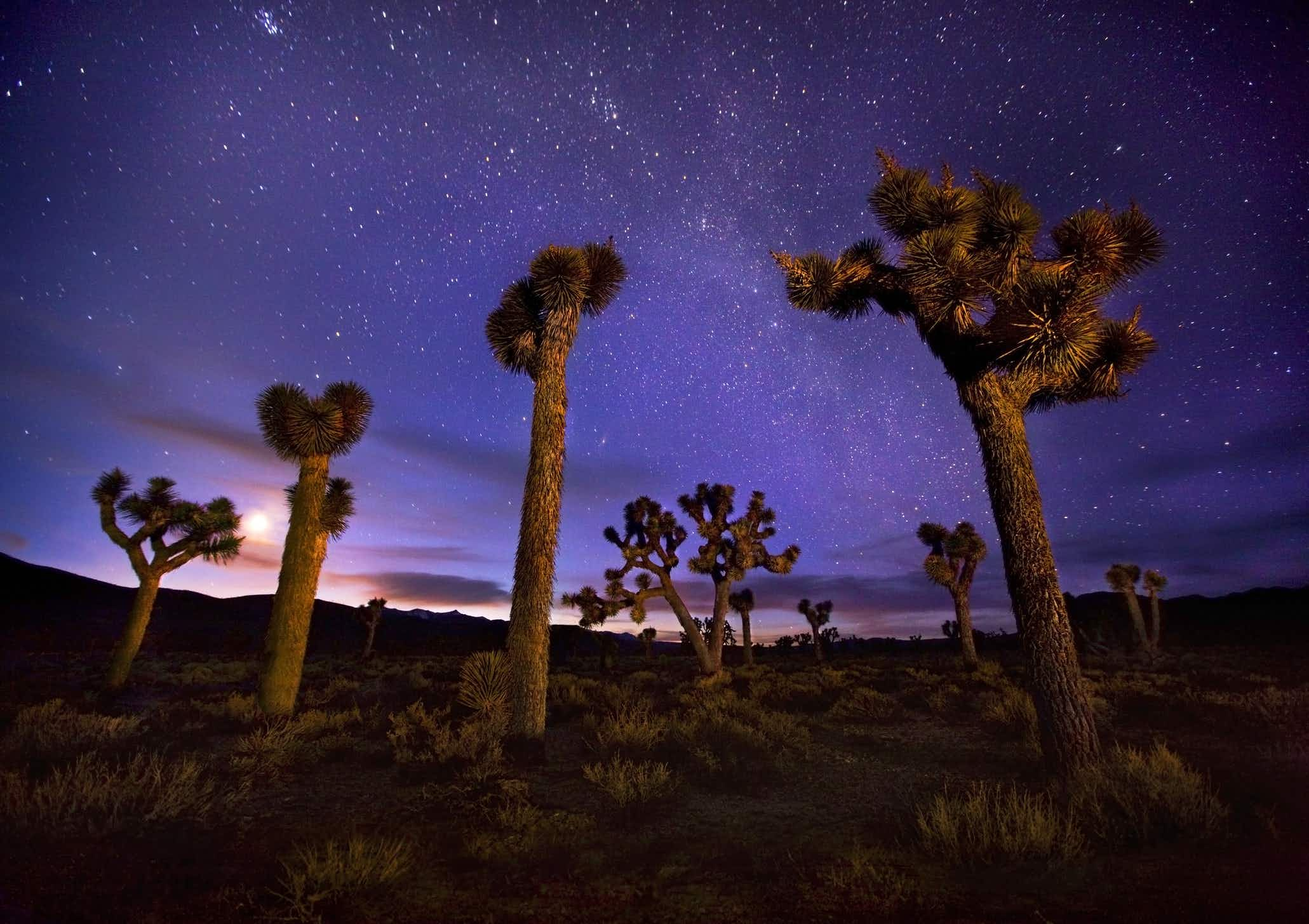 Joshua Tree National Park is set to draw in stargazers as it becomes a Dark Sky Park