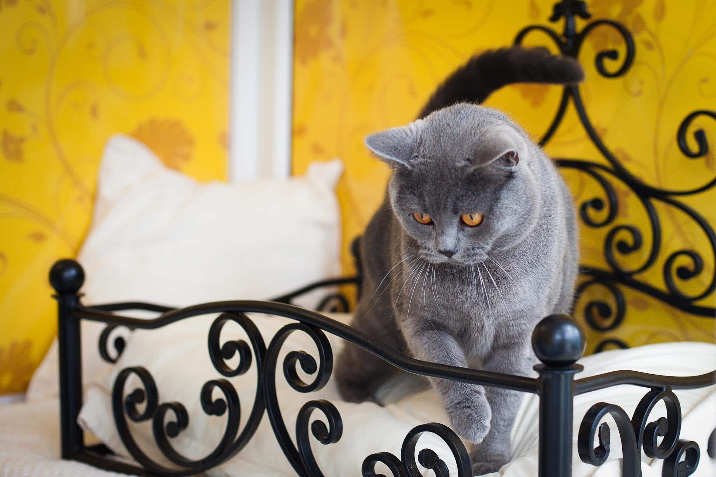 Individual suites and spa days - inside London's newest luxury hotel...for cats