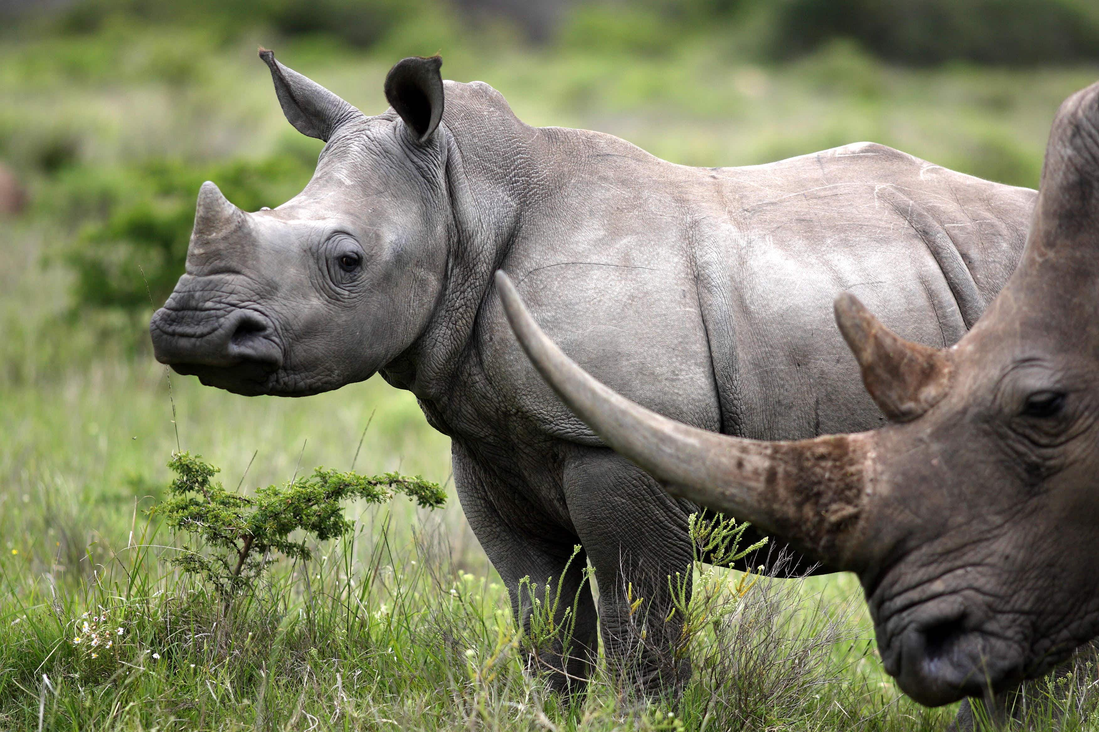 Walking safaris recognised as a way to see wildlife responsibly in South Africa