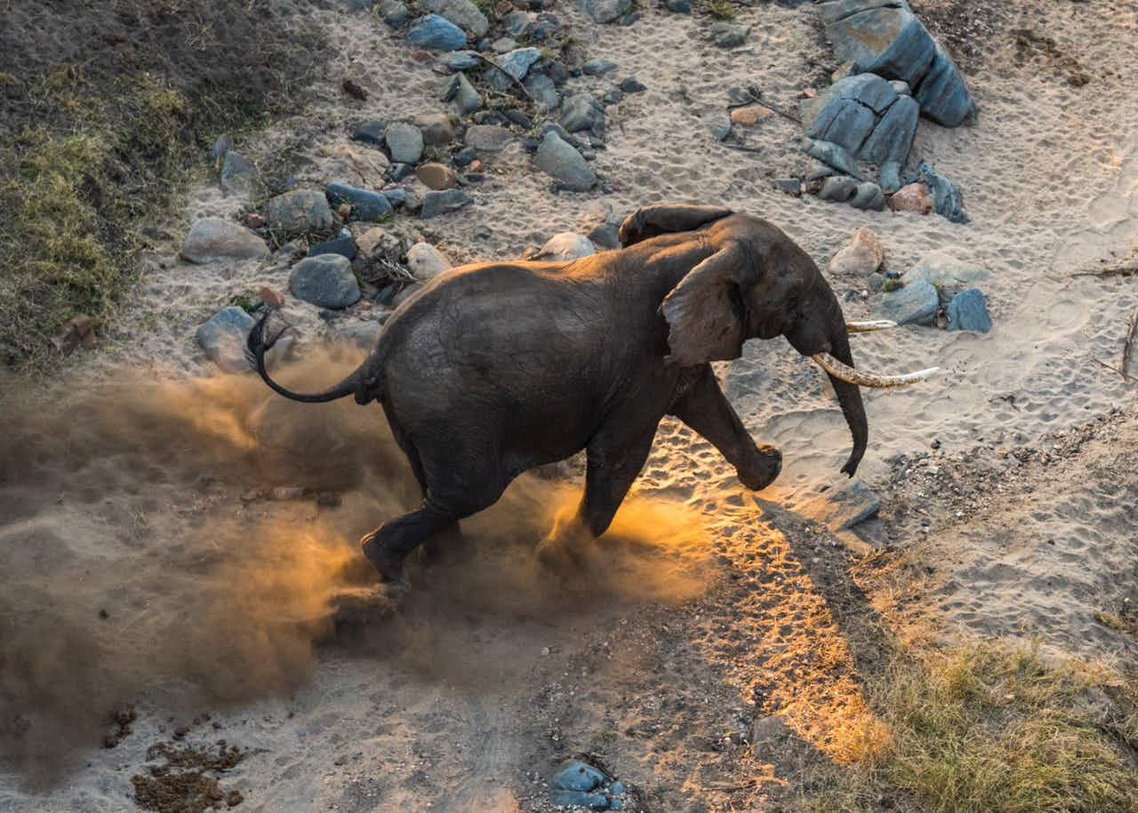 Conservationists move 500 elephants to Malawi wildlife reserve to save them from poachers