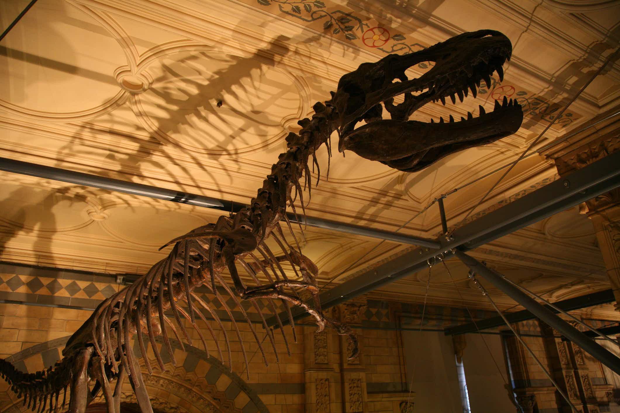 Ten-year-old boy spots dinosaur error at London's Natural History Museum
