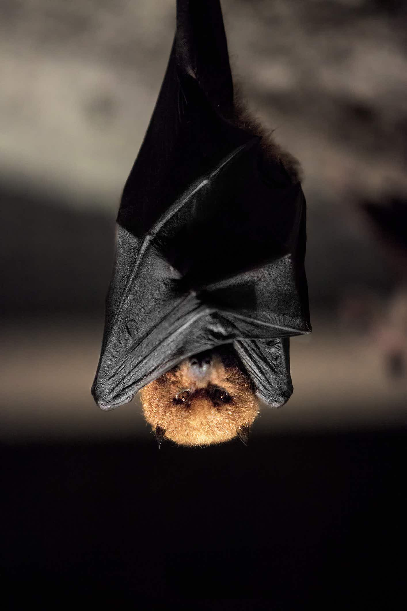No plans on Saturday? Why not celebrate European bat weekend
