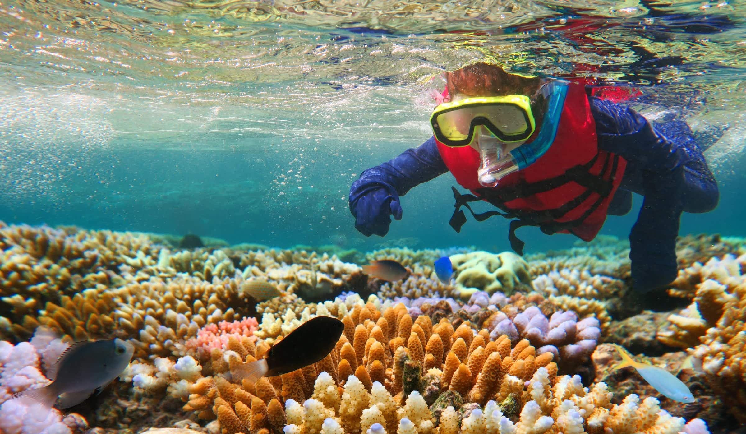 A six-week internship is on offer to work with conservationists of the Great Barrier Reef
