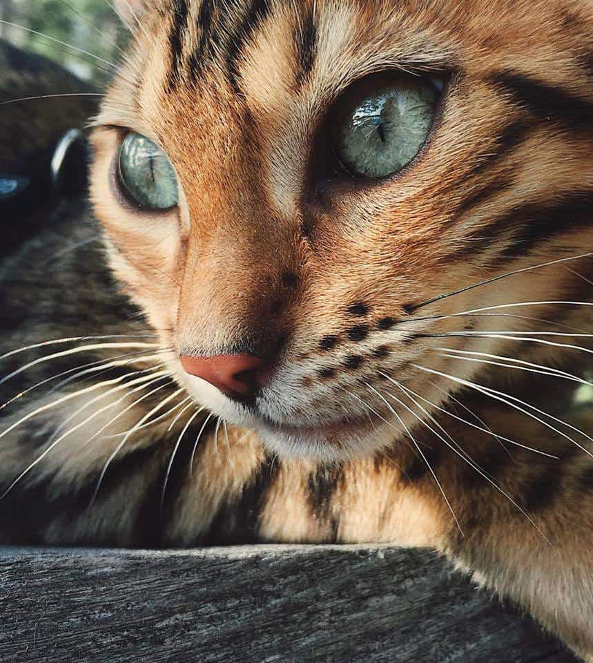 Canada's great outdoors has a new kind of wildlife – this Instagram-famous cat