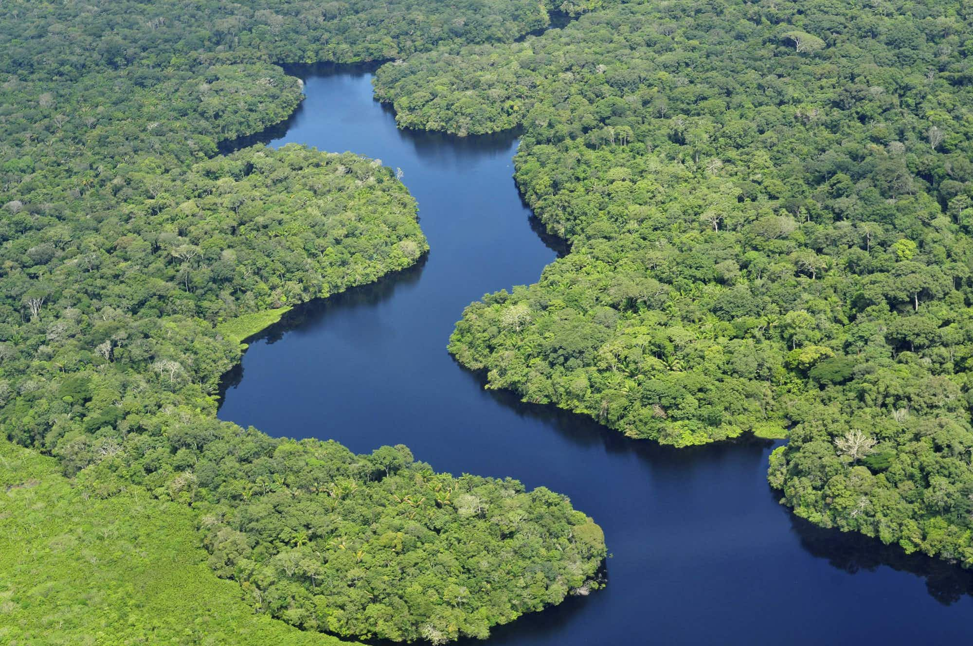 Brazil is set for largest Amazon restoration project ever