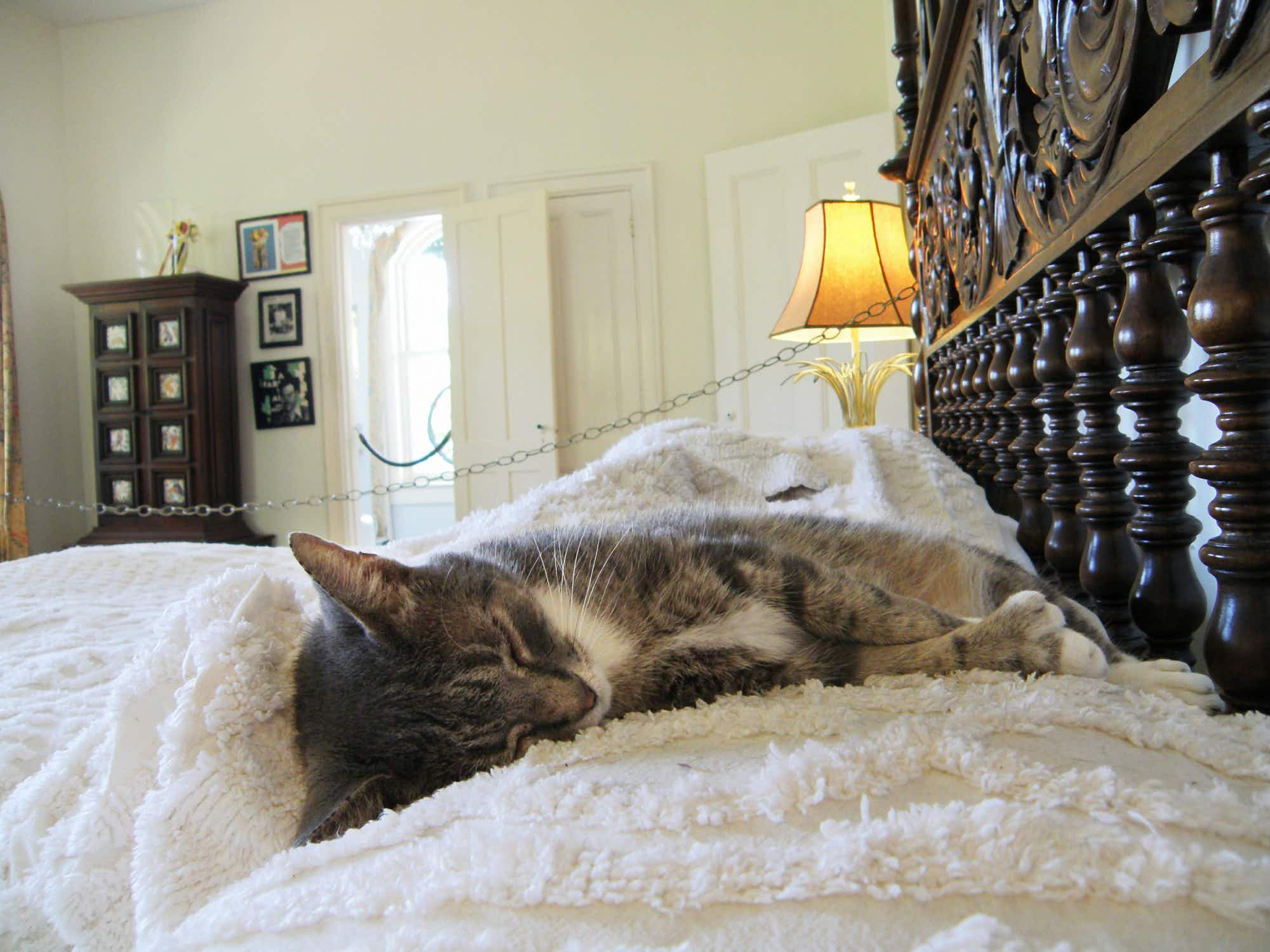 Hemingway's historic house and 54 cats survive Hurricane Irma in the Florida Keys