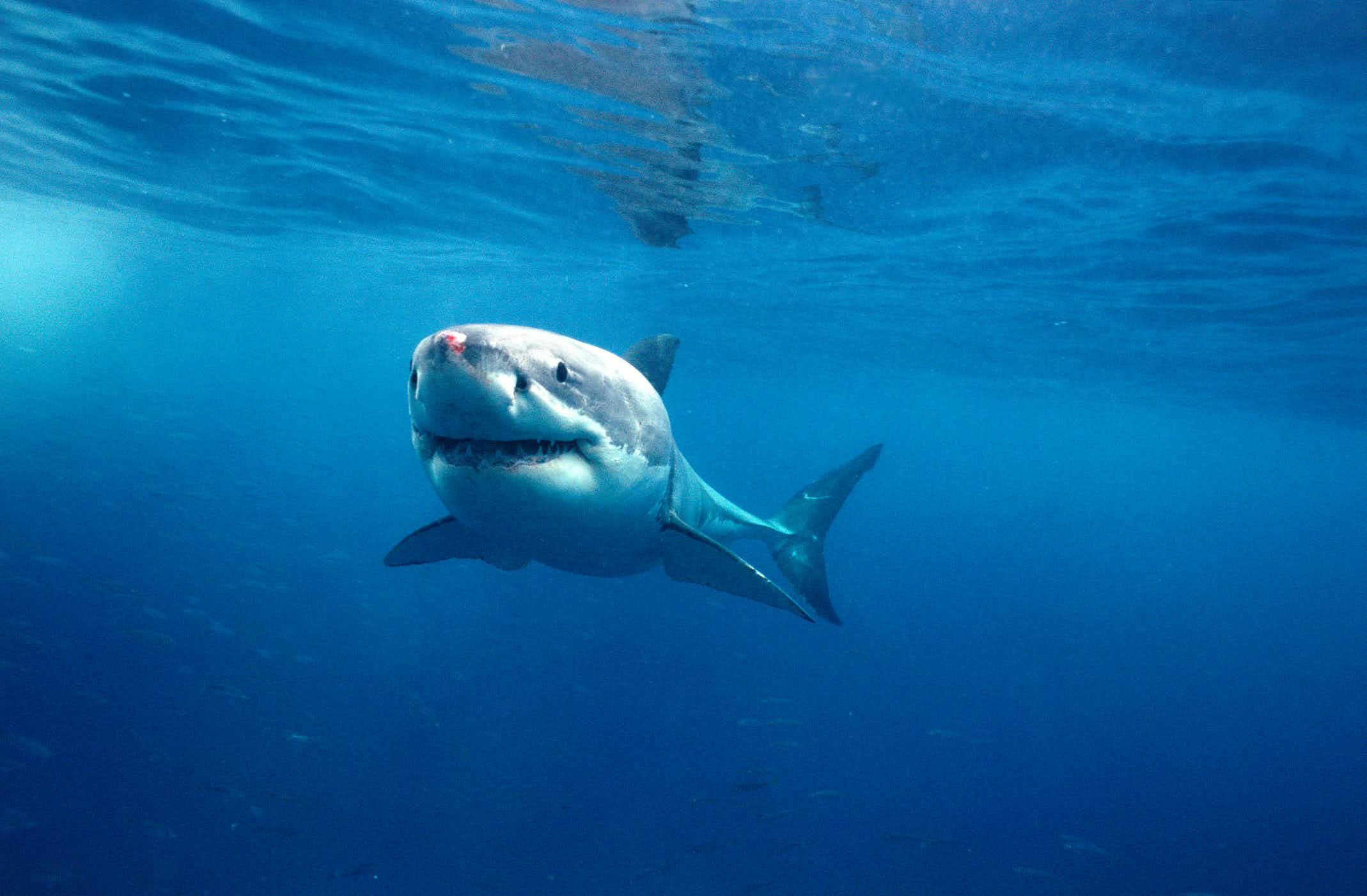 An invisible ocean barrier has been invented in Australia in a bid to prevent shark attacks