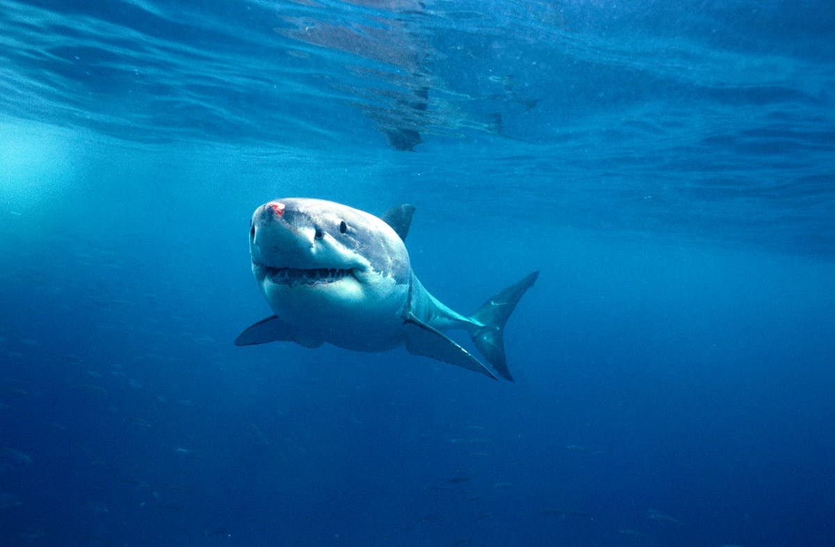 Scared of sharks? Study finds swimming with them might change your mind