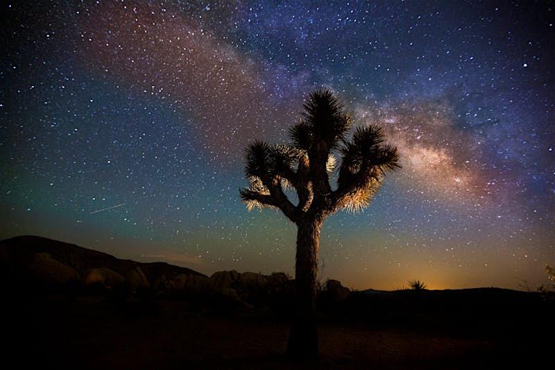 Starry night with joshua tree