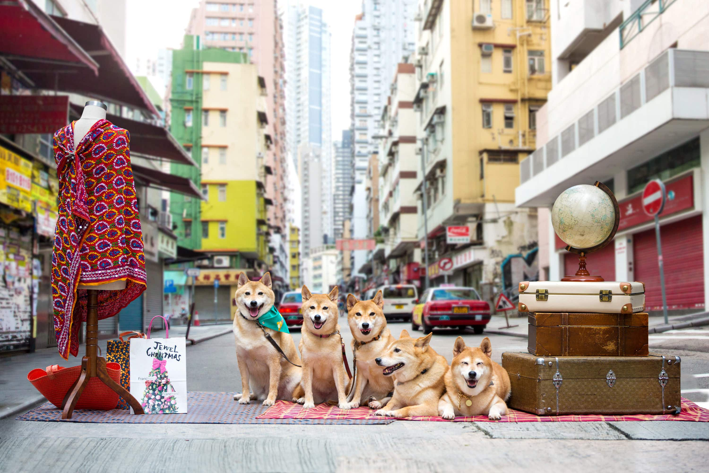Hong Kong Tourism Board has recruited furry local celebrities to promote this neighbourhood