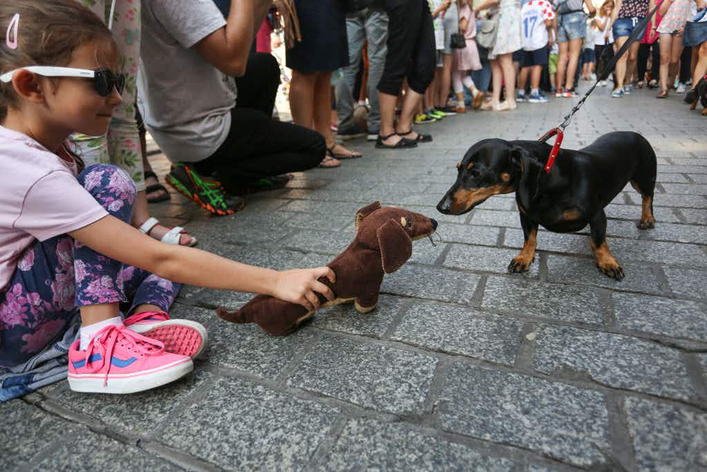 See the celebration of sausage dogs that took place in Krakow this week